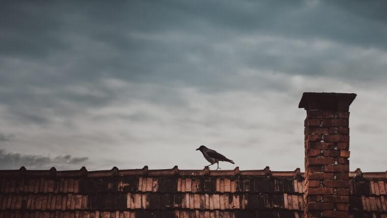 Dak schoorsteen vogel